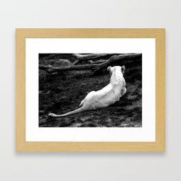 Lioness: Lounging Around Framed Art Print
