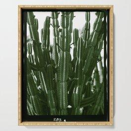 Vintage Cactus Print II Serving Tray