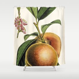 A peach plant - vintage illustration Shower Curtain