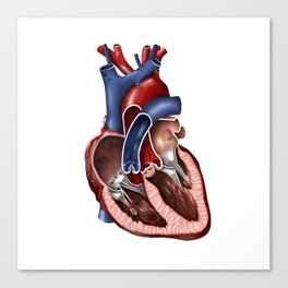 Cross section of human heart. Canvas Print