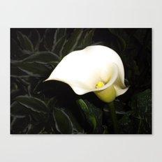 Calla Lily at Night Canvas Print