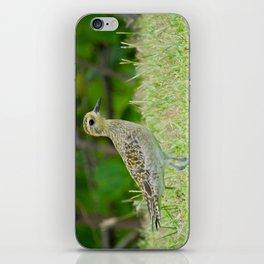 Pacific Golden Plover iPhone Skin