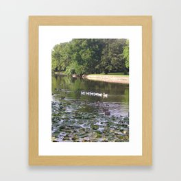 Ducks and Lilypads Framed Art Print