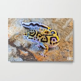 Exotic gecko  Metal Print