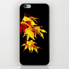 Golden Acer iPhone & iPod Skin