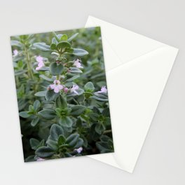 Thyme Stationery Cards