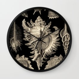 Ernst Haeckel Prosobranchia Sea Shells Wall Clock
