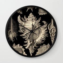 Ernst Haeckel Prosobranchia Sea Shells Wall Clock