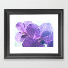 Orchid Vanda 82 Framed Art Print