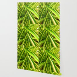 Spider Plant Leaves Wallpaper