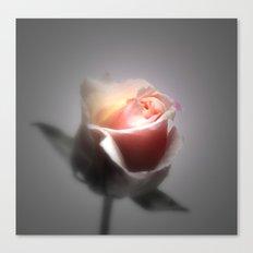 Single Rose Spotlighted Canvas Print