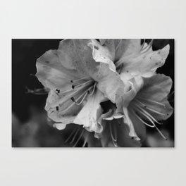 Timeless Black & White  Canvas Print