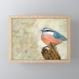 Nuthatch Framed Mini Art Print
