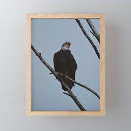 Spring Eagle Framed Mini Art Print