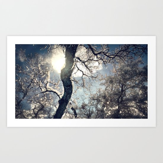 Morning Frost Art Print