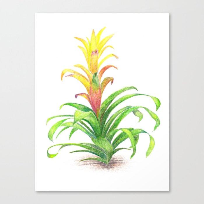 Bromeliad - Tropical plant Canvas Print