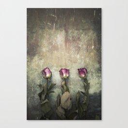 Three dried Roses Canvas Print