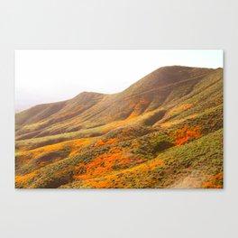 Poppy Super Bloom vintage fade 2 Canvas Print