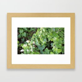 Ivy photograph Framed Art Print