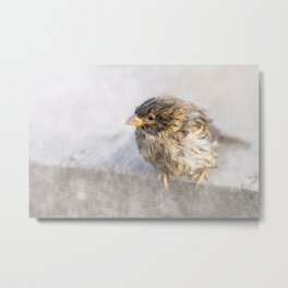Sparrow - Faulty forecast Metal Print
