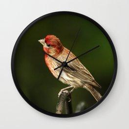 House Finch Wall Clock