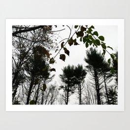 Autumn 11 Art Print