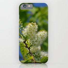 Mayday Tree in Bloom iPhone Case