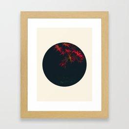Red Maple Against Black Background Round Photo Framed Art Print