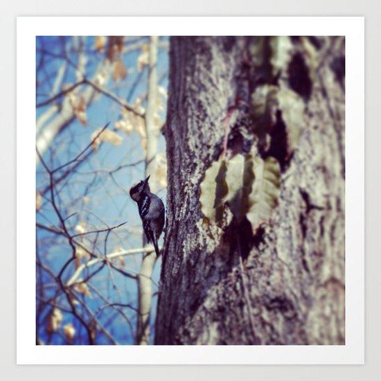 Baby Woodpecker  Art Print