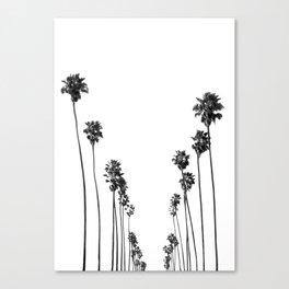 Palm Trees 8 Canvas Print