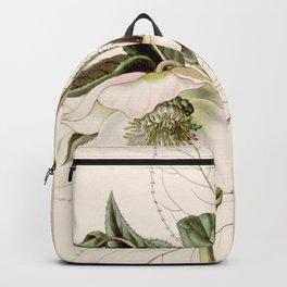 Helleborus orientalis Backpack