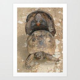 Humorous Mating Tortoises Art Print