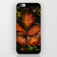 Golden Fall Sunset Leaves iPhone & iPod Skin
