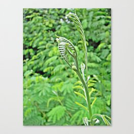 Soft stem treetop holds steady light Canvas Print