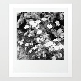 flowers in shades of grays Art Print