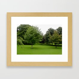 Soft Grass Framed Art Print