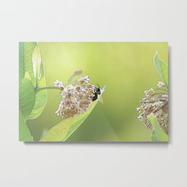 Blooming in the Morning Metal Print