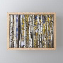 Aspen in the Fall Framed Mini Art Print