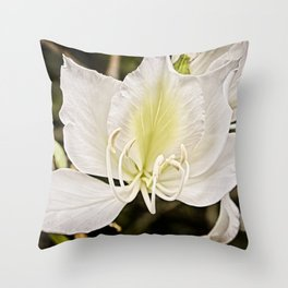 Butterfly tree or Bauhinia variegata Throw Pillow