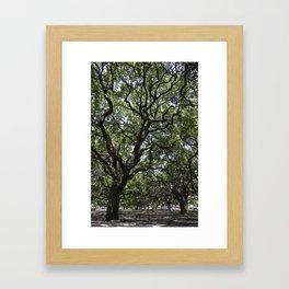 White Point Gardens Framed Art Print