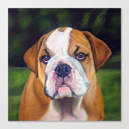 Puppy Bulldog Pastel Pencil Drawing Canvas Print