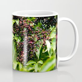 Elderberry fruits fresh clusters Coffee Mug