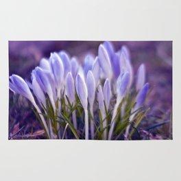 Ultra Violet Sound Rug