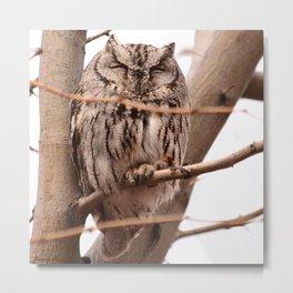 Wild Owl - Ivins, Utah Metal Print