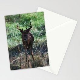Deer - Buck Stationery Cards