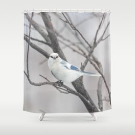 Azure tit, white prince Shower Curtain