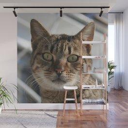 Beautiful Eyed Tabby Cat  Wall Mural