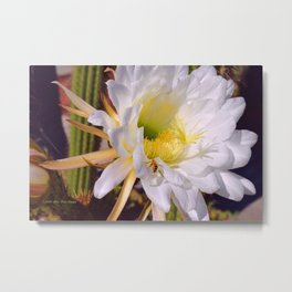 """""""Cactus Flower And Friend #1"""" Photograph Metal Print"""