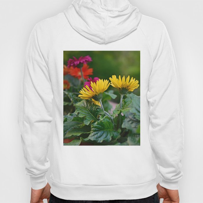 Spring Colors Hoody