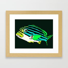 Oriental sweetlips fish Framed Art Print